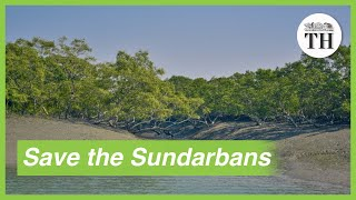 Importance of conserving Sundarbans, the largest mangrove forest in the world