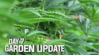 Remo's Garden Update (Day 7) by Urban Grower