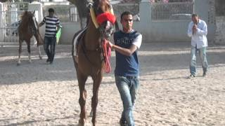preview picture of video 'Tunisie Course N6 - 09-06-2013 - cam Magturf.com - Hippodrome de Ksar Said'
