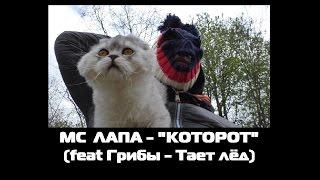 MC ЛАПА - КОТОРОТ (Пародия Грибы - Тает лёд)