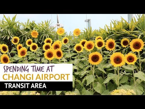 11 Ways to Spend Time During Transit at Changi Airport