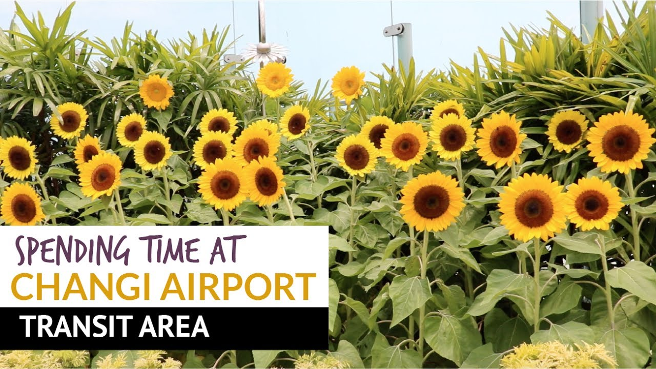 11 Ways to Spend Time During Transit at Changi Airport