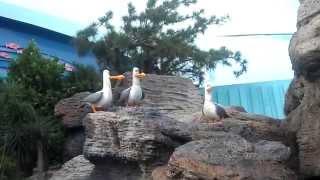 Disney World - Epcot, mine mine seagulls (finding nemo)