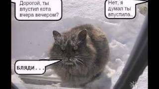 Кошки это кошки !!!.avi