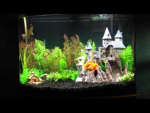 Fish tank movie yahoo answers giant fish tank leaks for Cleaning fish tank with vinegar