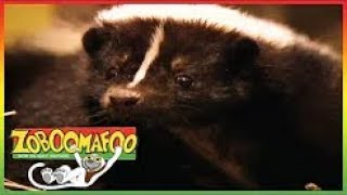 Zoboomafoo Season 2 Free Video Search Site Findclip