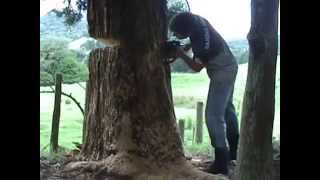 Amateur Tree Felling NZ
