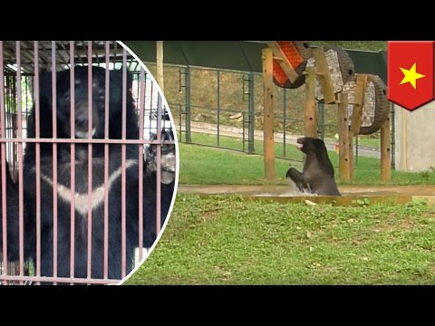Bear rescued from cruel bear farm