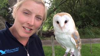 All About Barn Owls