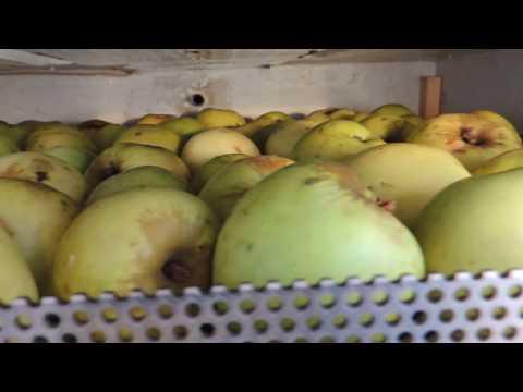 Как хранить ❄️ зимой фрукты-овощи 🍆🍑 на холодном балконе (winter apples).