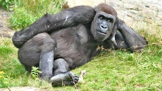 Top 10 Funny Monkeys Behaving Like Humans - Try Not To Laugh Challenge || Monkey Videos