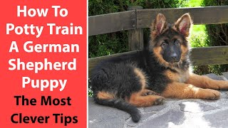 How To Potty Train A German Shepherd Puppy: The Most Clever Tips