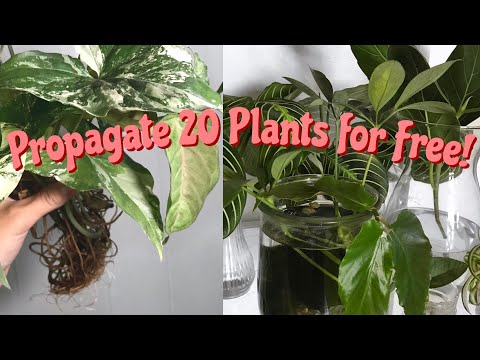 20 Easy Houseplants To Propagate! | 20 EASY INDOOR PLANTS YOU CAN GROW FOR FREE!