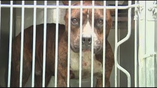 Bait dogs and dog fighting in SWFL