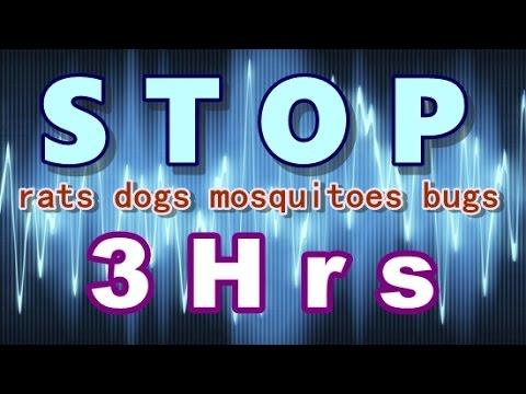 Klingen zu verscheuchen Ratten, Hunden, Mücken, Wanzen