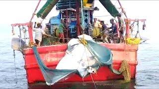 Amazing Big Manta Ray Fish Hunting in Sea Boat
