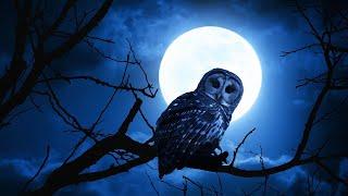 🔴 Sleep Music 24/7, Sleep Meditation, Zen, Relaxing Music, Insomnia, Meditation Music, Study, Sleep