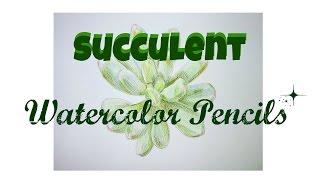 WatercolorPencils:Succulent水彩色鉛筆:乙女心多肉植物