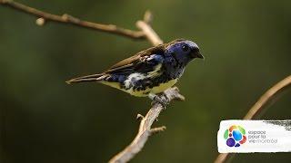 Au Biodôme nos oiseaux ne sont pas faits en chocolat mais ils
