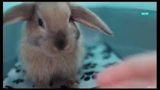 Зверопой собака Джина поёт. Мало так мало.