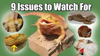 9 Common Issues to Watch For in Bearded Dragons