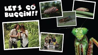 Find out what a 'Let's Go Buggin' Tour is all about.