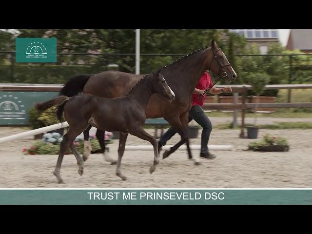 TRUST ME PRINSEVELD DSC