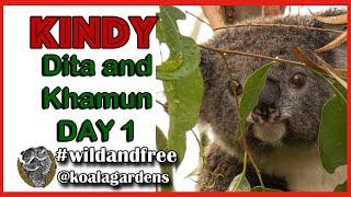 Kindy at Koala Gardens – first arrivals 2020
