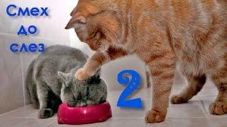 Смех до слез от этих котов 2