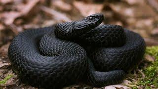 Осторожно змеи Брачный период начался