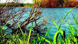 Озеро чёрное люберцы рыбалка