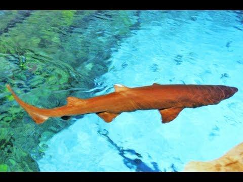 Shark Encounter®