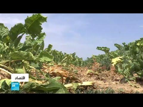 العرب اليوم - شاهد:موجةحر وجفاف تهدد نشاط المزارعين في ألمانيا