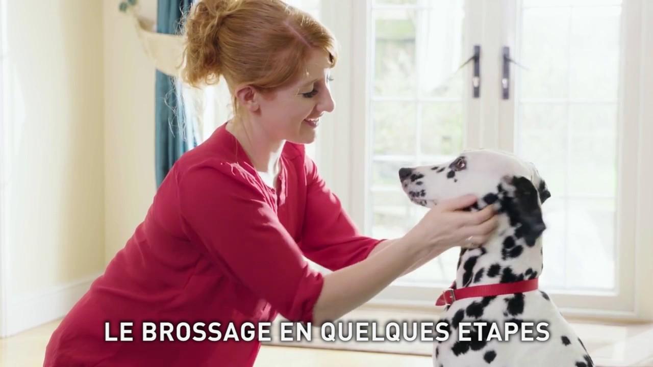 Le brossage des dents de votre chien ou chat