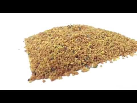 Video Andrographis paniculata Seeds India - [Supplier & Exporter] Extract