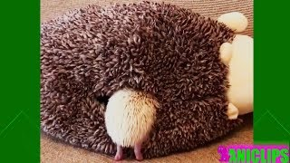 Hedgehog - What are you looking for?