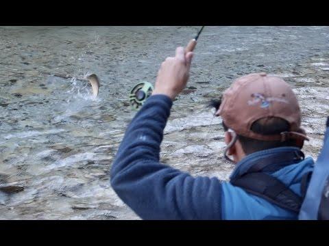 Pesca di Samara yar rossa