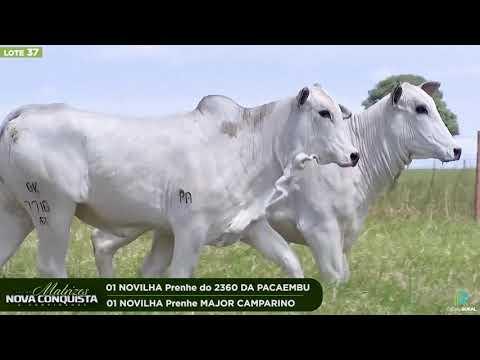 02 NOVILHAS PRENHES