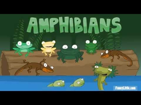 Toad, Frog, Pollywog! Amphibians Kids Song Salamanders Waterdogs Tadpoles Newt