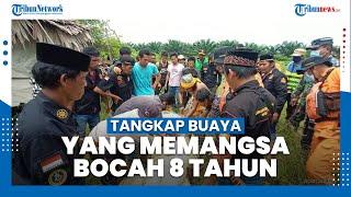 Detik-detik TNI-Polri Bedah Perut Buaya Muara yang Memangsa Bocah 8 Tahun, Mayat Ternyata Masih Utuh