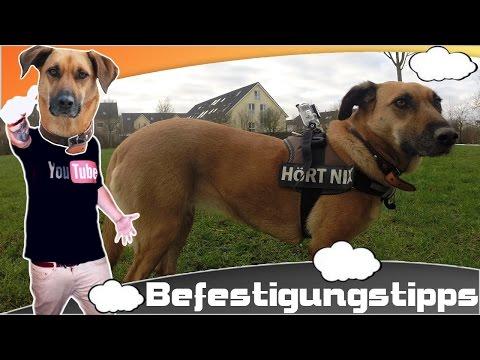 Hunde Cam - Tutorial [German] - GoPro Befestigungstipps Für Den Hund | GoPro Hunde Kamera