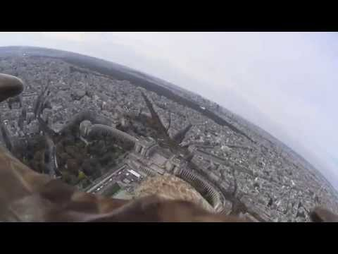 White-tailed eagle flies over Paris from top of Eiffel Tower