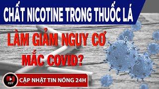 Chất Nicotine Trong Thuốc Lá Làm Giảm Nguy Cơ Mắc Covid-19 ?