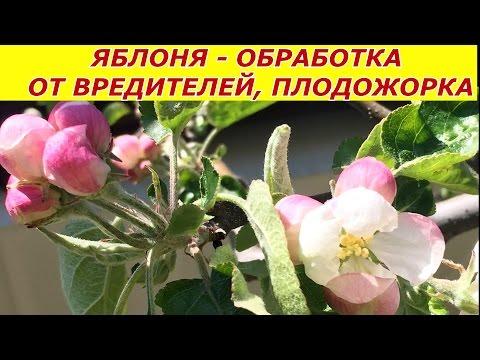 Яблоня. Обработка от вредителей. Плодожорка !!!