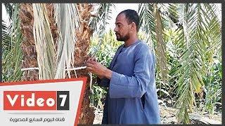 """تحميل اغاني """"زغلول يا بلح"""".. الثانية في إنتاج """"مرطب القلوب"""" MP3"""