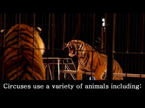 "animals in entertainment essay Submit your essay for analysis  activists who act against using animals in  sports and entertainment claim  ""animals for entertainment"" bbc."