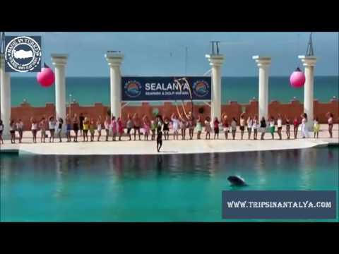 Alanya Dolphin show tour 20