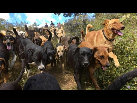 Shelter in Costa Rica cares for over 900 dogs