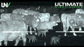 Gambar cover Thermal Predator Hunting   45 Coyotes Down with the IR Hunter MKIII 35mm