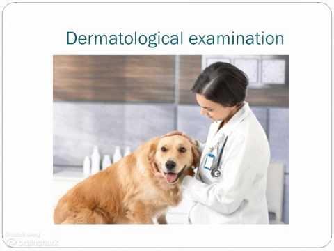 Eczema unguento efficace